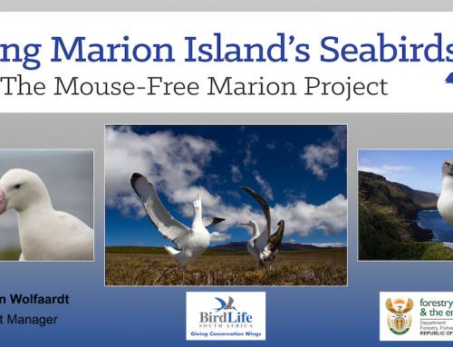 Project Manager Anton Wolfaardt gives a virtual talk on eradicating Marion Island's mice to the Witwatersrand Bird Club