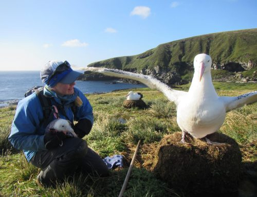 """""""Linking Foraging Behaviour and Demographic Responses of Wandering Albatrosses on Marion Island"""".  Danielle Keys describes her PhD research"""